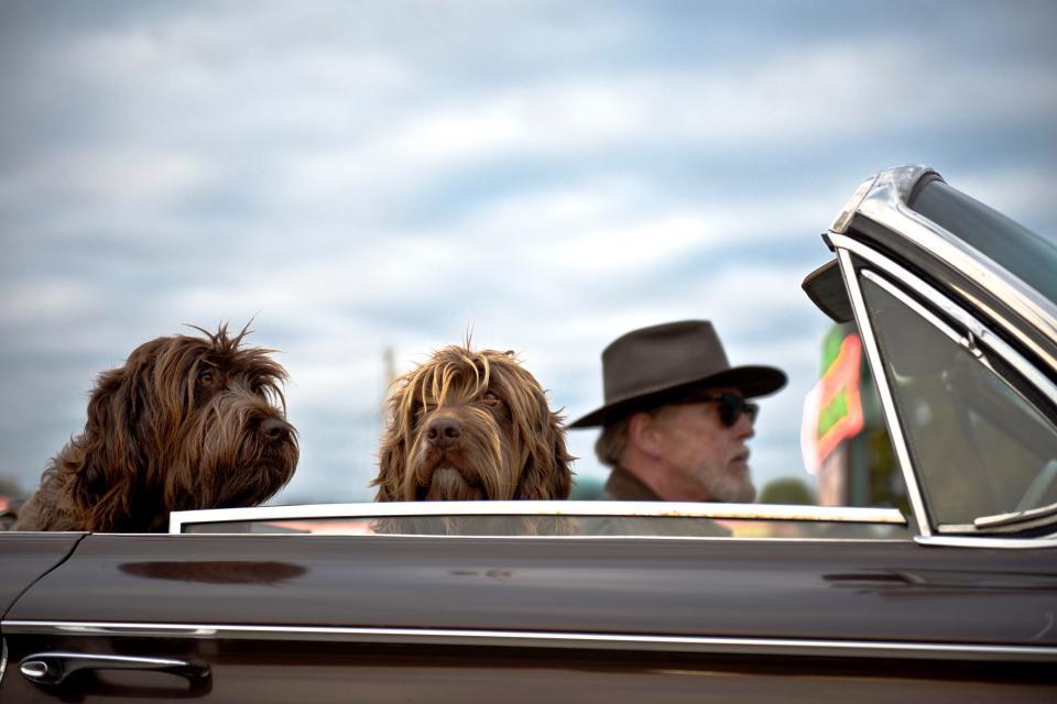 traagrijden levensgevaarlijk hond cabrio stocksnap